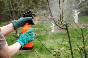 Опрыскивание деревьев в саду фото