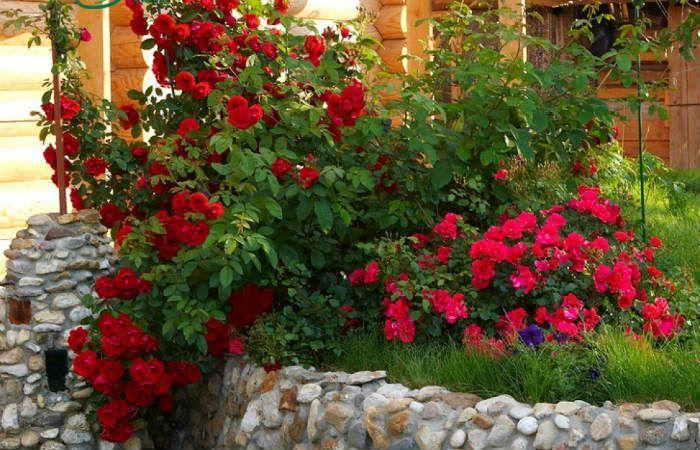 Роза Сантана фото