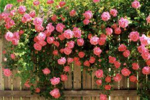 Вьющиеся цветы фото