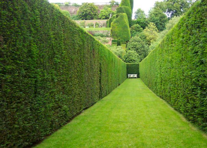 Зеленая изгородь стена фото