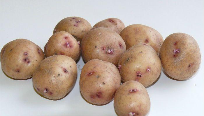 Картофель сорт