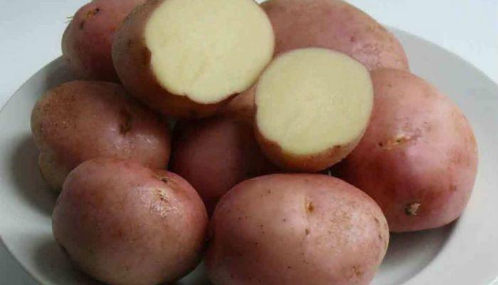 Картофель Виза фото