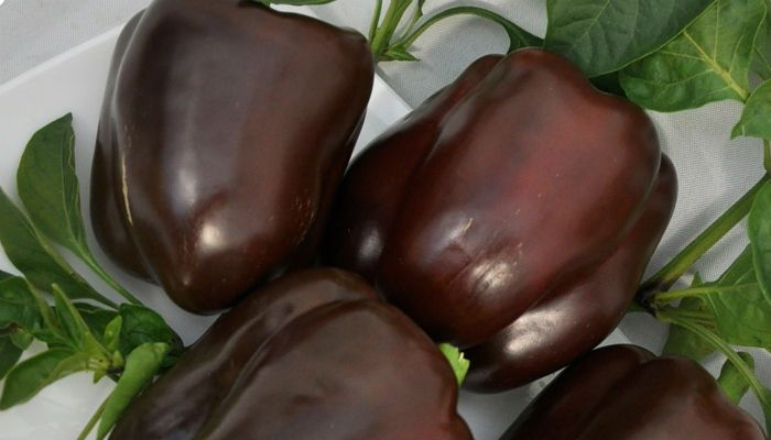 Шоколадка фото