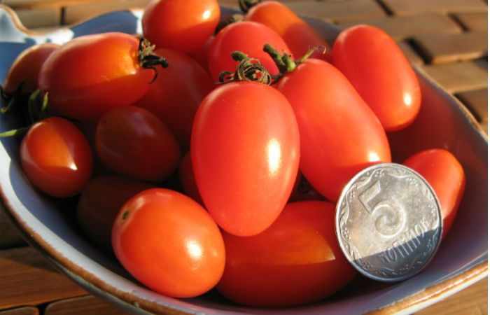 Сорт томатов Алсу фото