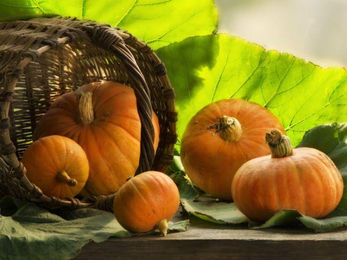 Сорт тыквы Алтайская фото