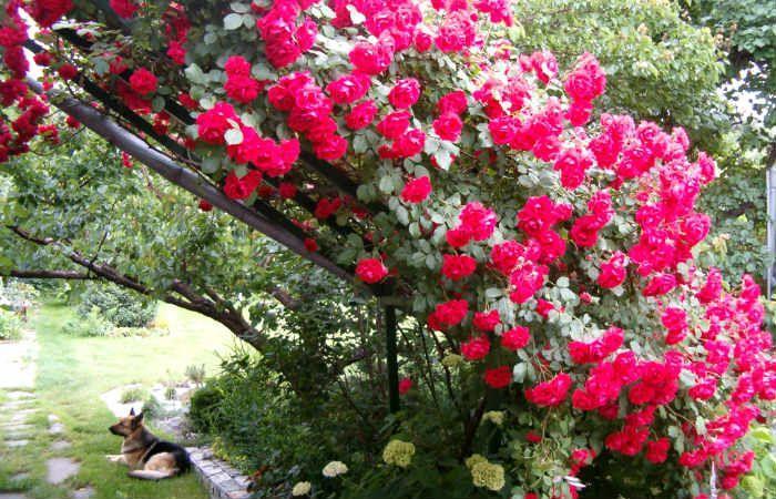 Вертикальная клумба для вьющихся цветов фото