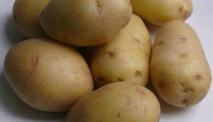 Картофель Артемис фото