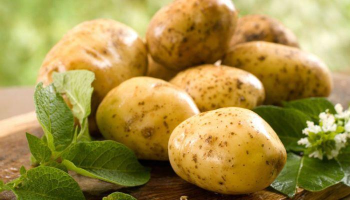 Картофель Фреско фото