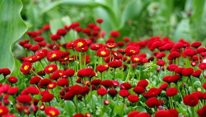Красный шар фото