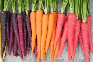 Морковь на грядке фото