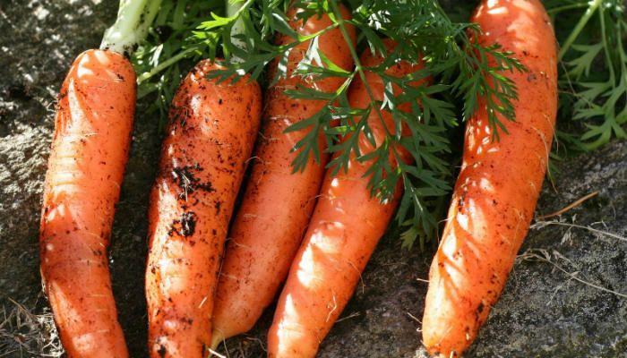 Морковь Нандрин фото