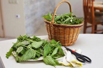 Как использовать крапиву в качестве удобрения
