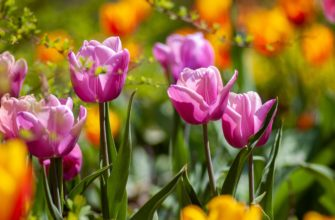 дни для посадки цветов